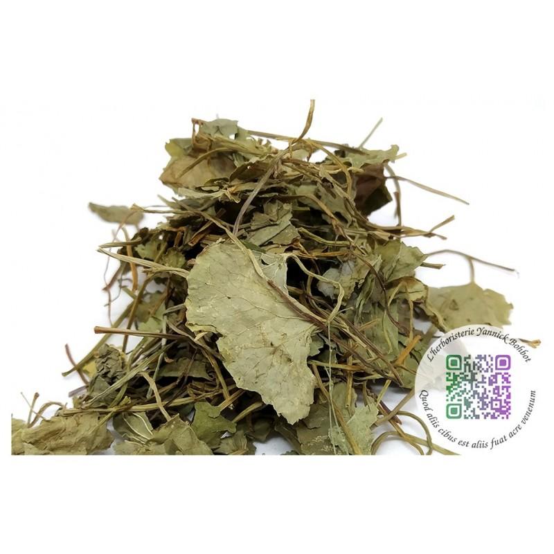 """Centella asiatica - Hydrocotyle -Gotu kola- plante séchée - """"L'herboristerie Yannick Bohbot"""""""