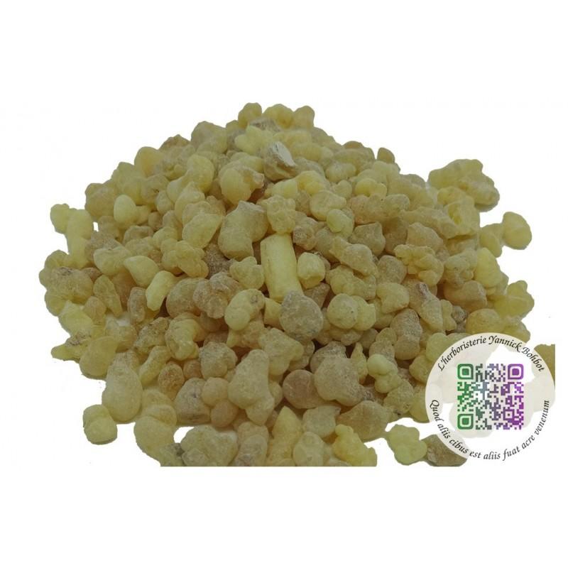 "Oliban Alden - Boswellia carterii - résine grains - ""L'herboristerie Yannick Bohbot"""