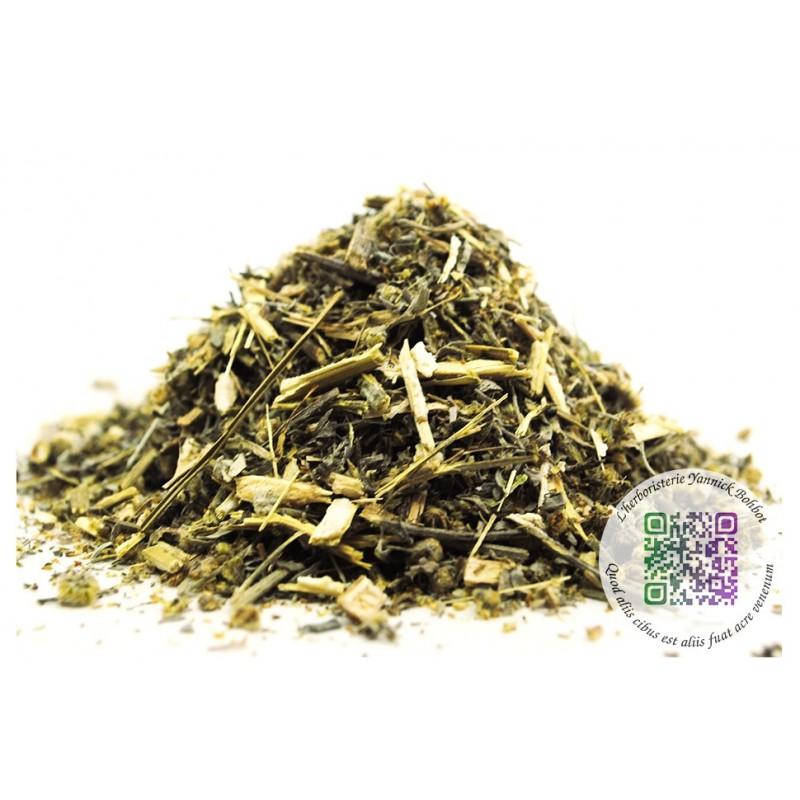 """Absinthe - Artemisia absinthium - partie aérienne - """"L'herboristerie Yannick Bohbot"""""""